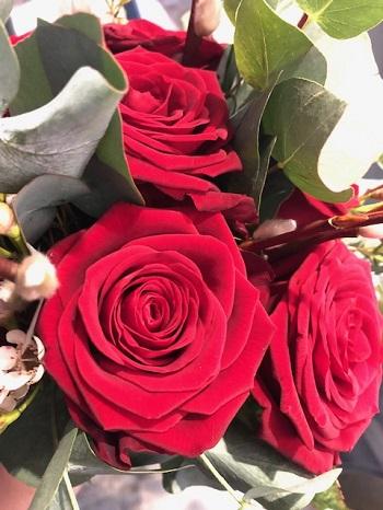 ValentinesRoses2.jpg