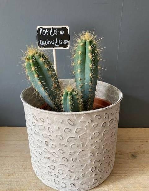 Cactus and Printed Pot
