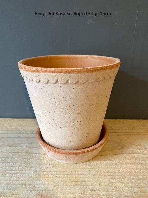Bergs-Pot-Rosa-Scalloped-Edge-16cm.jpg