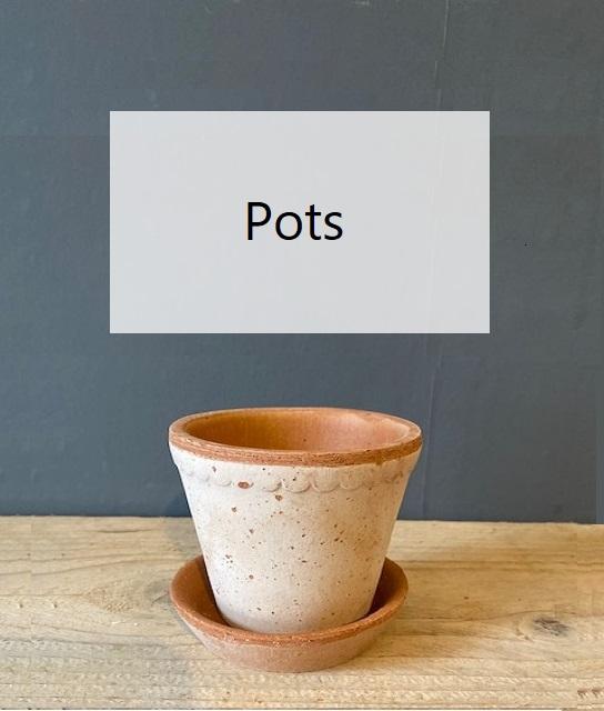Bergs-Pot-Rosa-Scalloped-Edge-8.5cm-1.jpg