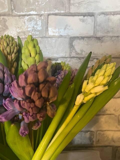Hyacinths-rotated.jpg