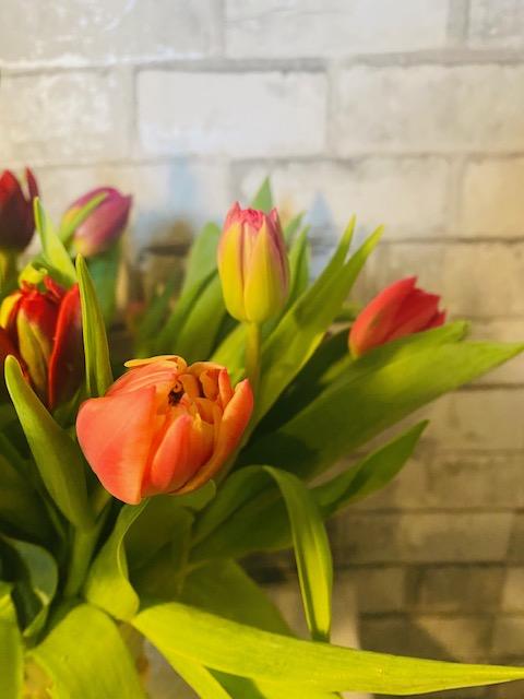 Tulip-closeup2.jpg